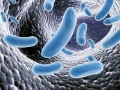 Справочник инфекций