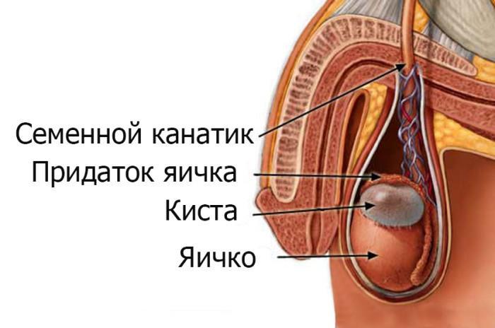 Лечение бесплодия у женщин лечение женского бесплодия в Москве